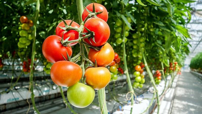 Jó hír jött a zöldségek szerelmeseinek