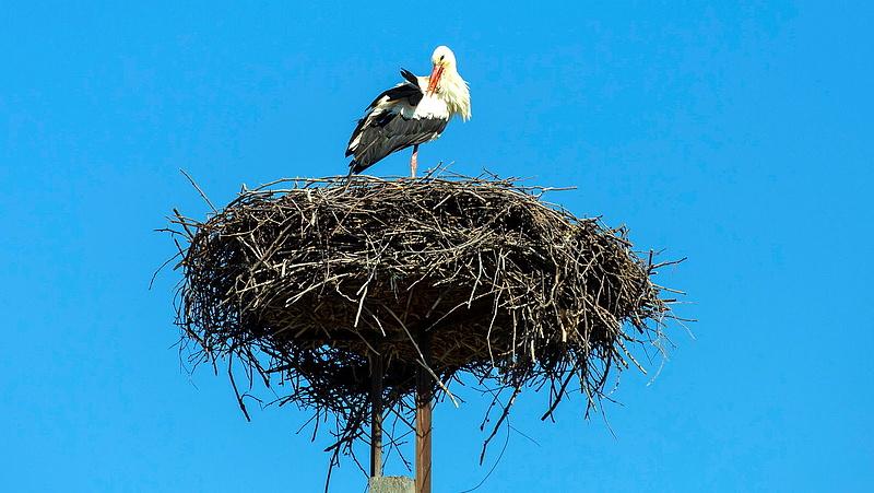 A gólyákkal a jó idő is megérkezik? Kiadták a 7 napos előrejelzést