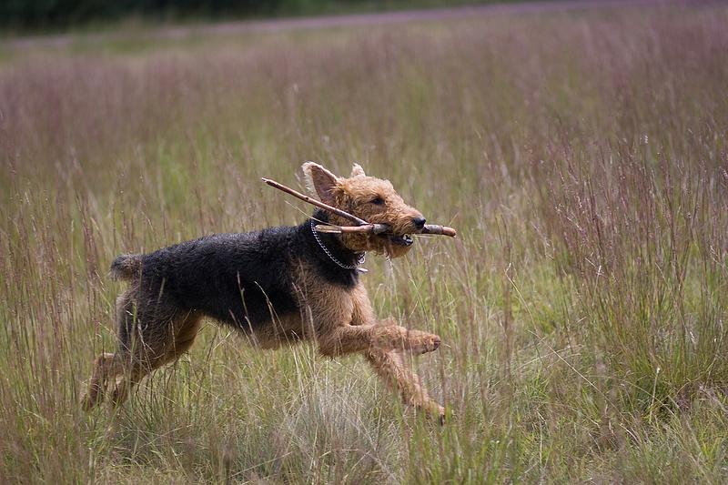 Kánikula vs. kutyák: ezekre érdemes figyelni