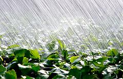 Szokatlanul sok eső esett Franciaország déli részén