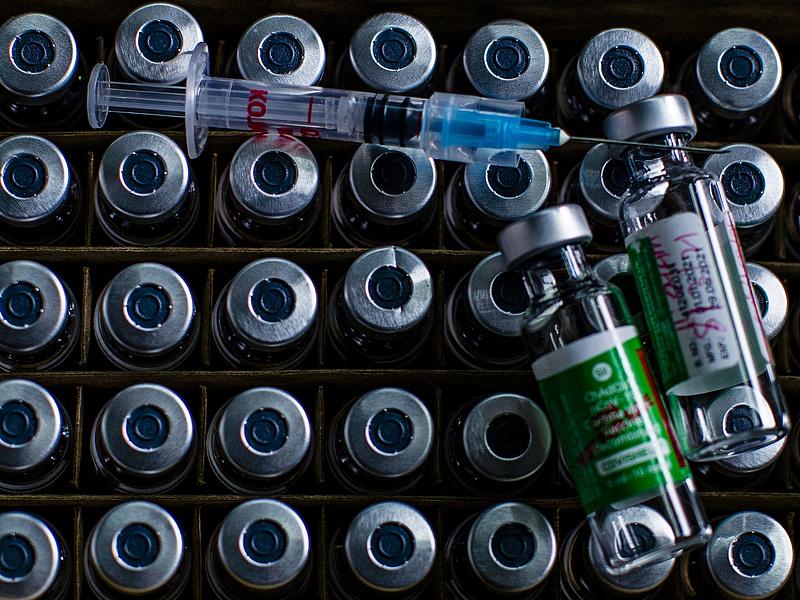 Koronavírus: kiadták az állatvédő vakcina első tételét