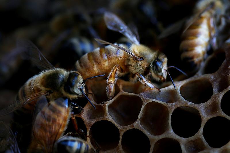 A méhészek megsegítését kérte az agrárminiszter Brüsszelben