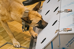 Kutyavásárt rendez a NAV