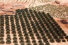 Beerdősíti a sivatagot Szaúd-Arábia