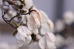Ami gyümölcs nem fagyott el, azt az eső verheti és rohaszthatja el