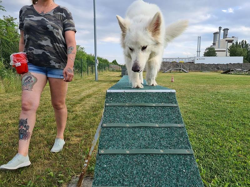Koronavírus: a lezárások után rehabilitálják a kutyákat, Bécsben