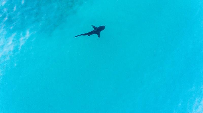 A drónoknak köszönhetően derült ki, hogy nem olyan veszélyesek a cápák, mint sokan hiszik
