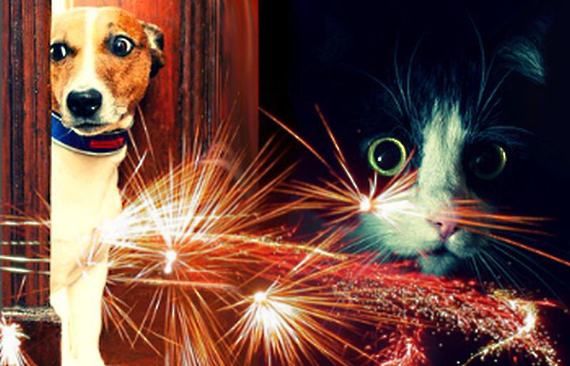 Az állatoknak nem ünnep a tűzijáték – jó tanácsok a baj elkerülésére