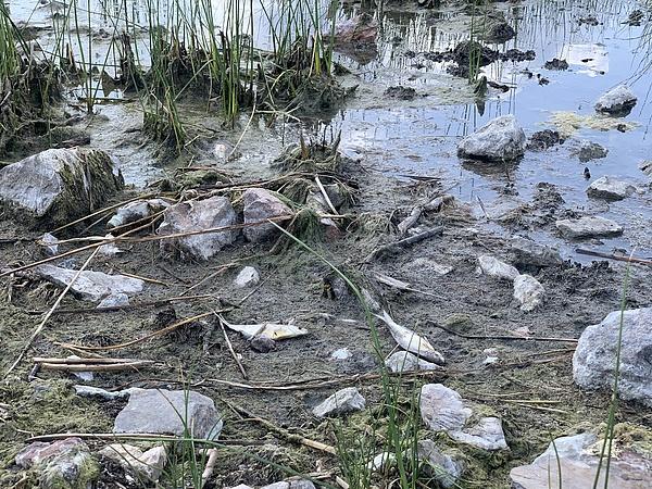 Tesztelik, hogy működik-e a Velencei-tó vizének pótlása