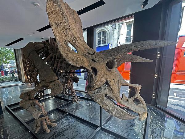 2,4 milliárd forintot fizetett valaki egy dinoszaurusz csonvázáért