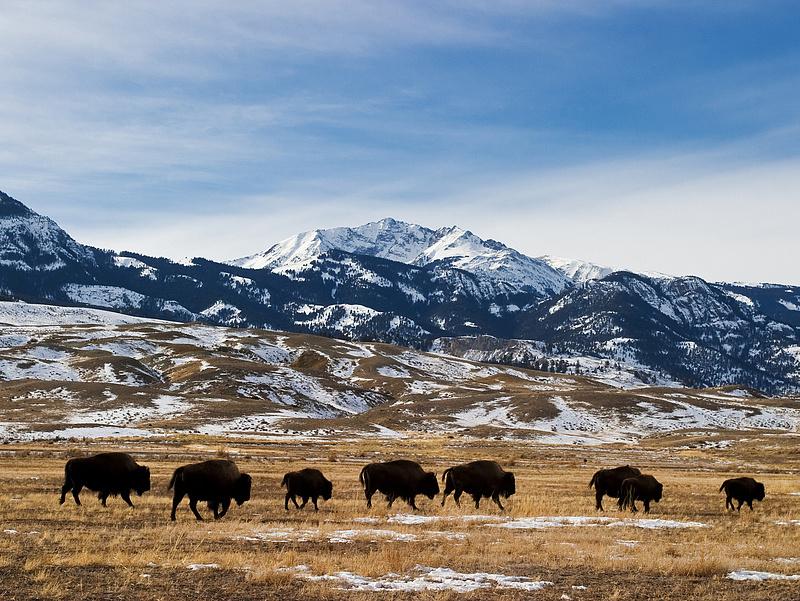 Soha ilyen jó augusztusa nem volt a Yellowstone Nemzeti Parknak