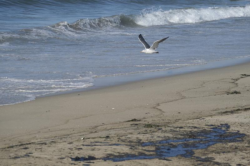 Hatalmas olajszőnyeg borítja a dél-kaliforniai partvidéket