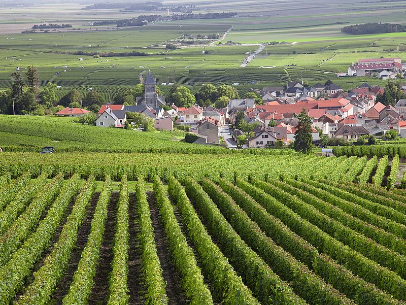 A burgundi szőlőültetvényeknek betett az időjárás