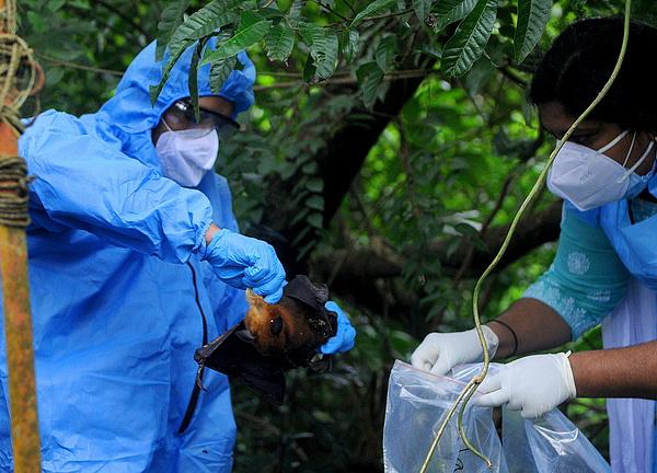A lappangó Nipah-vírus a koronavírusnál is halálosabb járványt indíthat, már sok helyen fertőz