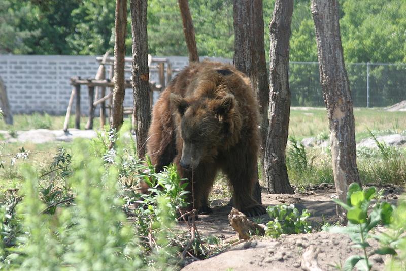 Öt és fél millilót hozott a medvetámadás