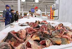 Több halat kellene enni - üzent az agrártárca