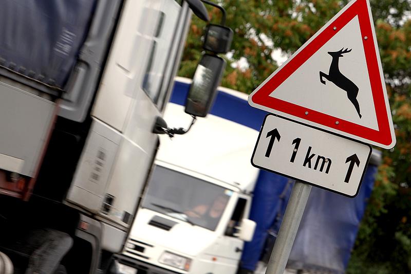 Vigyázat, szarvasveszély van az utakon!